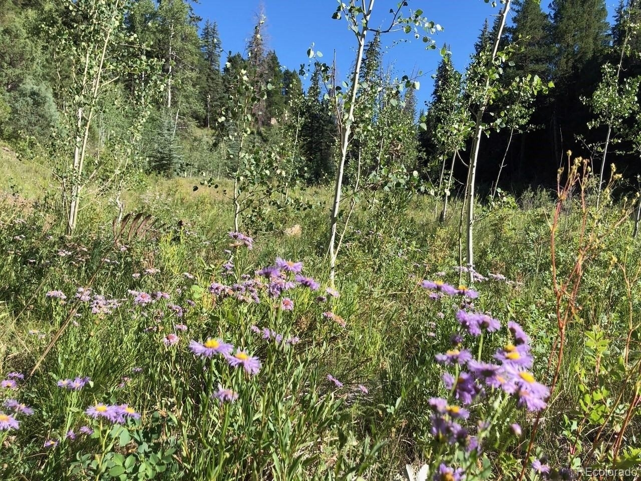 11. Land for Sale at Telluride, CO 81430
