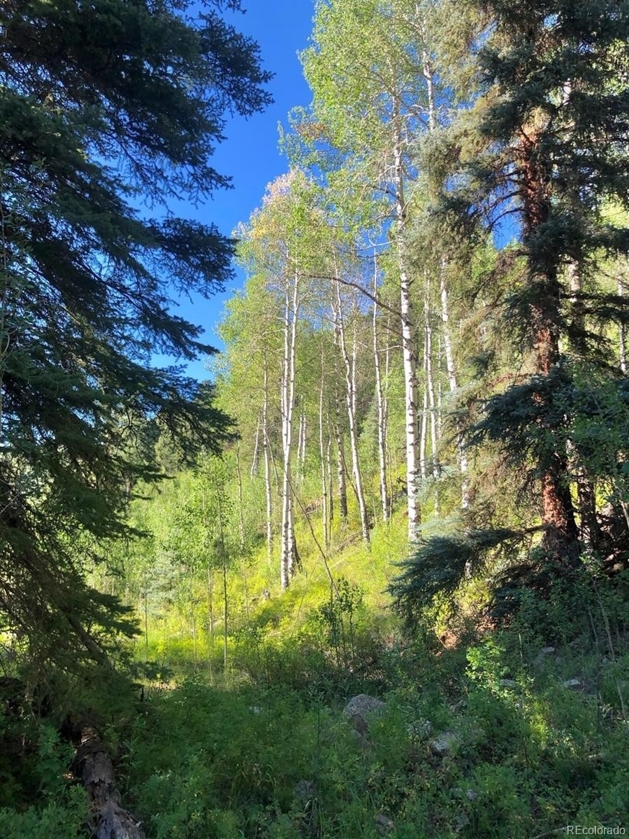 12. Land for Sale at Telluride, CO 81430