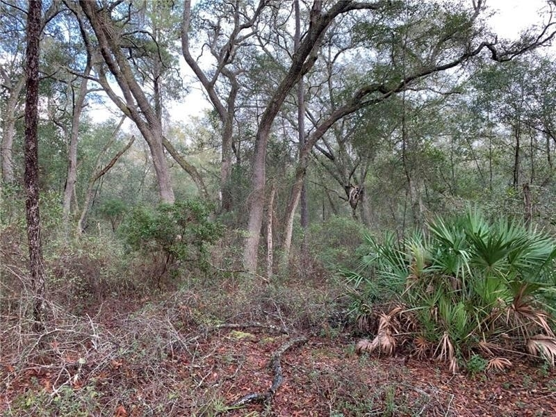 Land for Sale at De Leon Springs, FL 32130