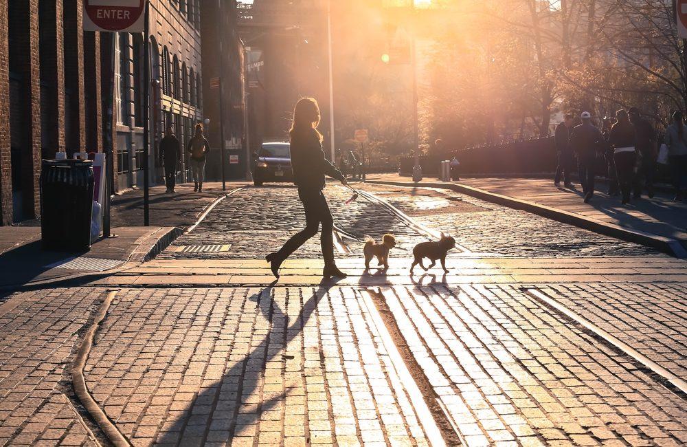 Pet-Friendly Brooklyn Apartments