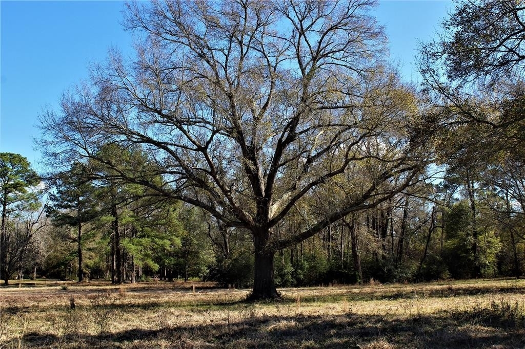 Property for Sale at Goodrich, TX 77335